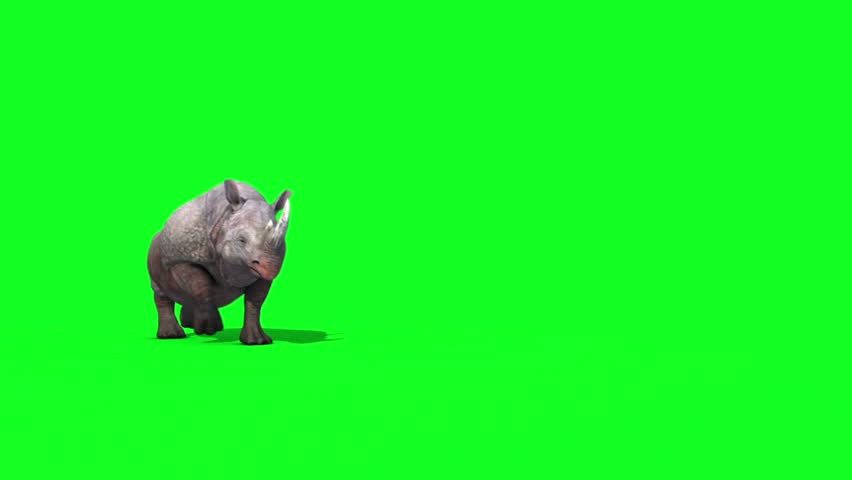 Rhinoceros Runs Front Green Screen 3D Renderings Animations Animals
