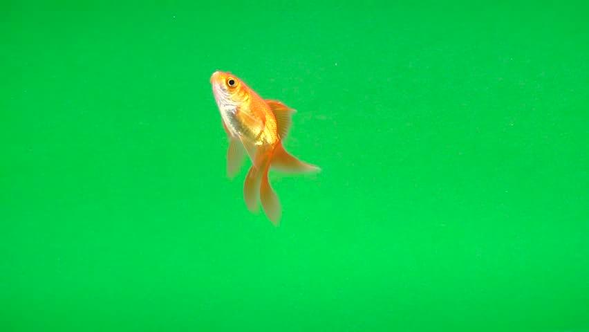 Hd aquarium video download free.