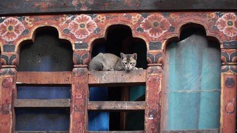 Cat in Thimphu city. Bhutan