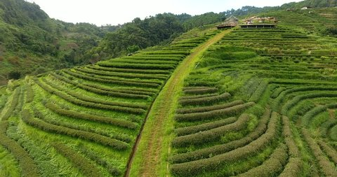 Aerial view of tea plantation terrace on mountain. Beautiful agriculture farm land of traditional village in countryside valley.