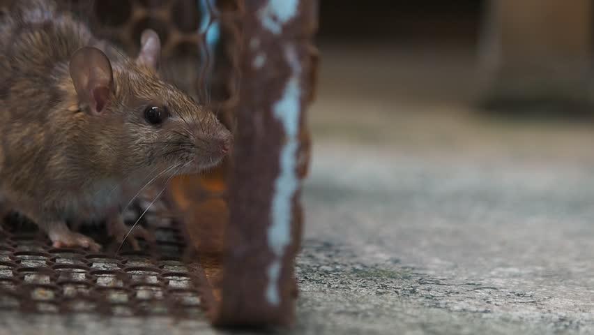 Catching mice
