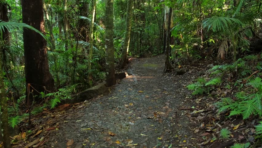 Upper section of the Curtis Falls Trail, a popular short rainforest walk  on the Gold Coast Hinterland.