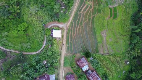 Drone shot top view aerial follow footpath jungle mountain village rice field buildings in Flores / Drone shot top view aerial follow footpath jungle mountain village rice field buildings in Flores