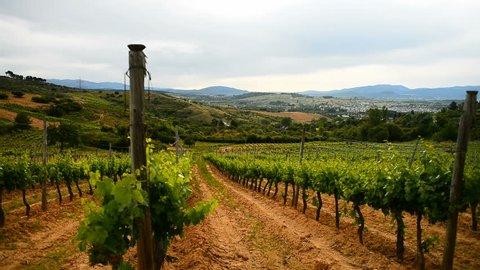Vineyards, Galicia, Spain, Europe. Camino de Santiago.