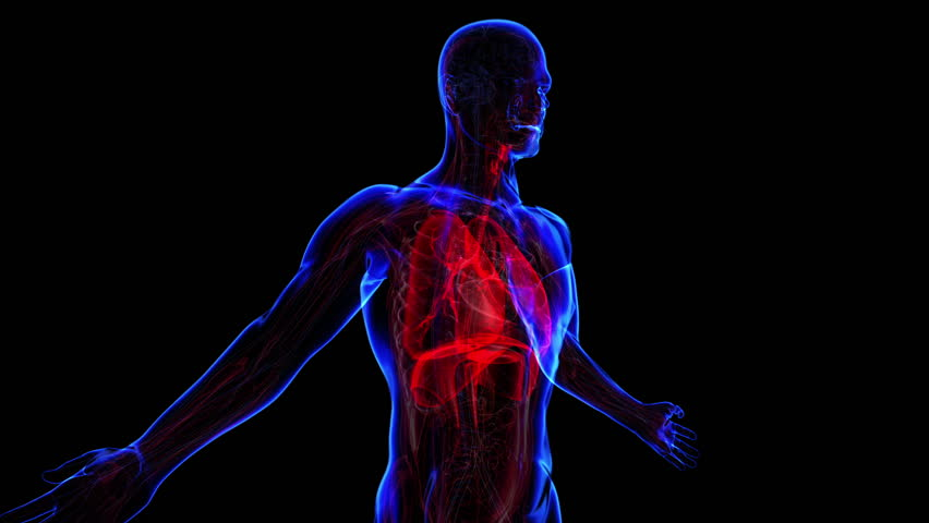 All Human Body Systems Respiratory Stock Footage Video 100
