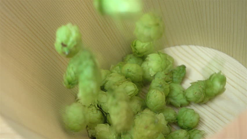 High quality video of hops falling into wooden bucket in real 1080p slow motion 250fps