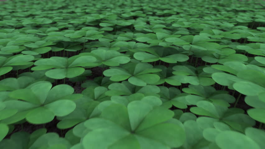 Clover Field.