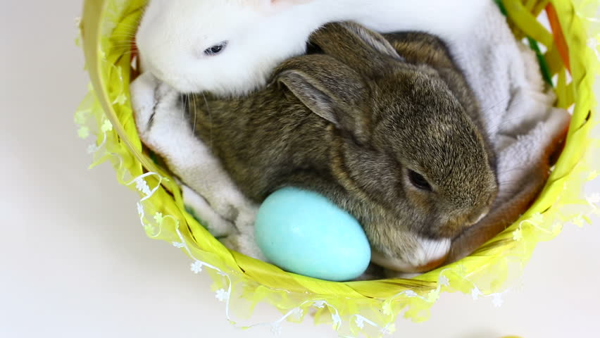 From above shot of Easter Bunnies inside a basket. | Shutterstock HD Video #3570308