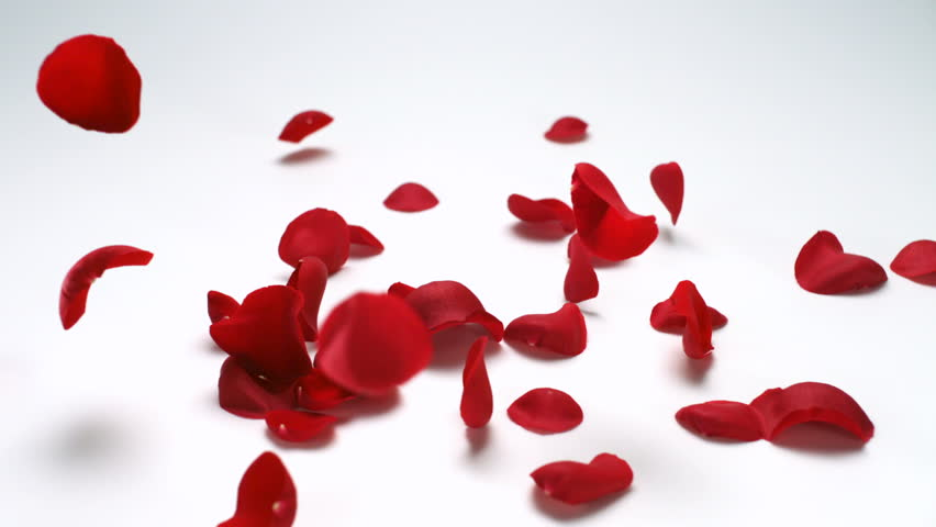 Faling red rose petal shooting with high speed camera, phantom flex.