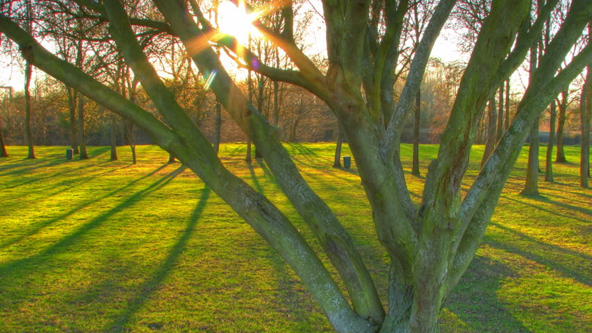 Sunset beams through trees, HD time lapse clip, high dynamic range imaging (HDR)