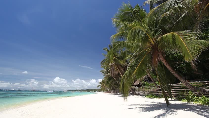 Palm tree on tropical beach, Philippines, Boracay