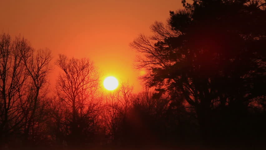 Beautiful  sunrise in the wood.Timelapse   Shutterstock HD Video #3753488