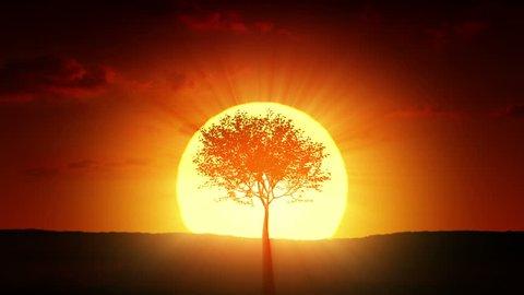 Growing tree at sunrise