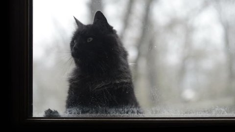 Black cat and white cat looking through a dirty window