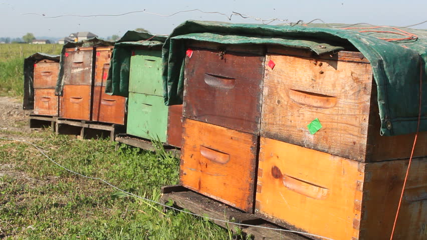 Man-made beehive boxes are lined up beside a Blueberry farm/Man-made Beehive Boxes/An assortment of man-made beehive boxes will be used to pollinate a field of blueberries.