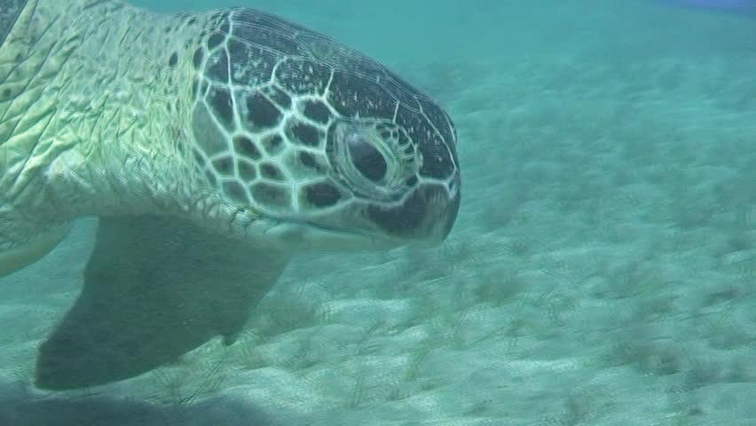 Of A Sea Turtle Men/'s Tee Image by Shutterstock