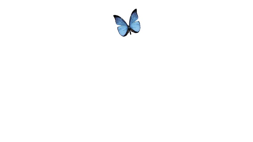 Beautiful Butterfly Flying On A White Background Alpha Channel Is Included