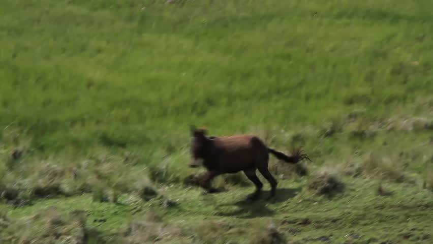 A wild horse running around a field
