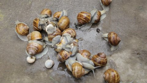 Huddle snails