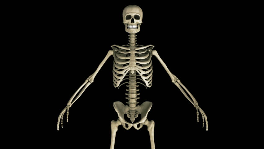 footage of a human skeleton stock footage video 179560 | shutterstock, Skeleton