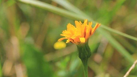 Flower. Find similar clips in our portfolio.