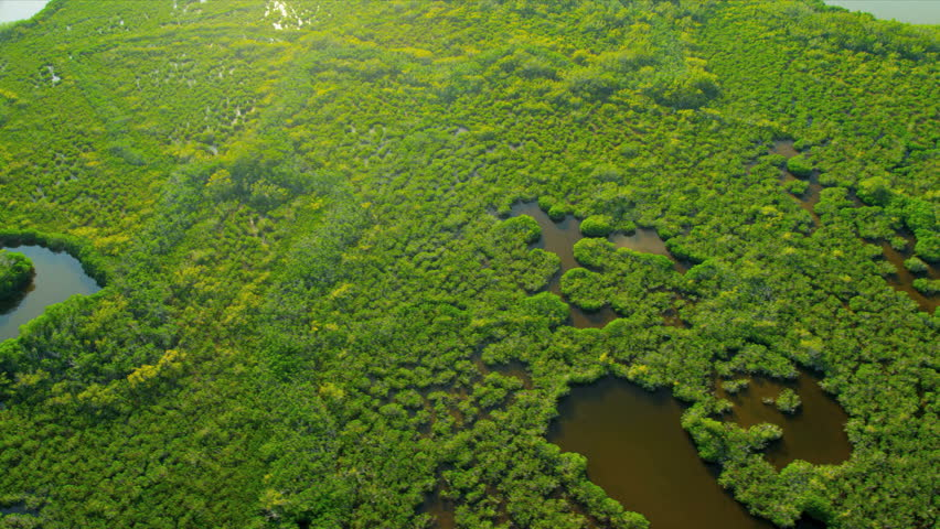 Aerial view Everglades National Park swamps and Wetlands the largest Sub tropical region in Southern Florida, USA, RED EPIC | Shutterstock HD Video #4205551
