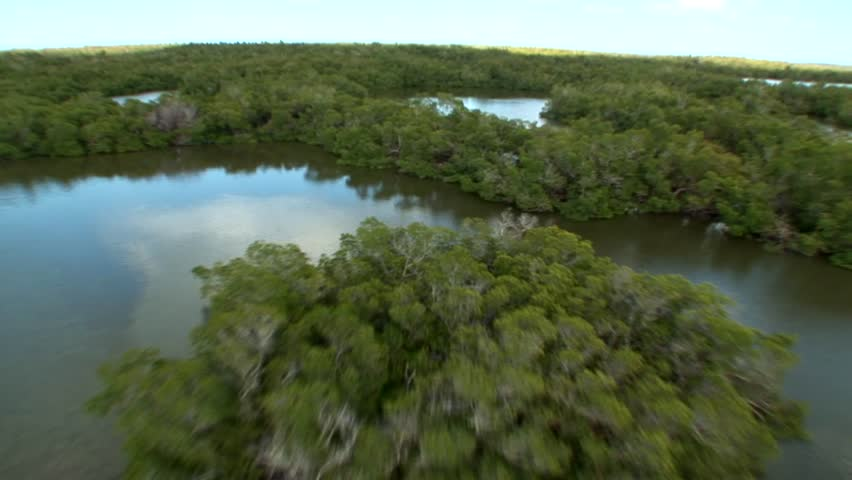 Aerial view of the beautiful Everglades with diverse foliage, lakes, and mangrove forests | Shutterstock HD Video #4266491