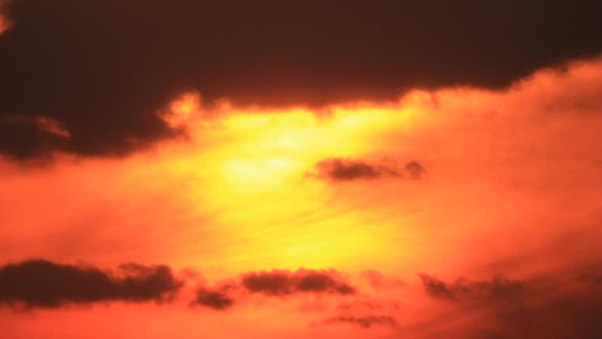 Birds silhouettes flight at background warm orange sky | Shutterstock HD Video #4306628