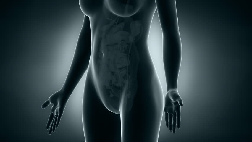 Woman reproductive system x-ray vie in loop