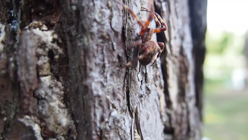 Big Spider Crawls Up By Stock Footage Video 100 Royalty Free 4370528 Shutterstock
