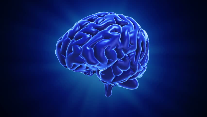 A stylized human brain. Seamless loop  | Shutterstock HD Video #4407458