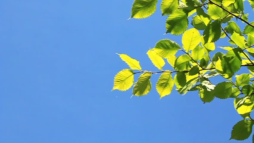 Green leafs on blue background