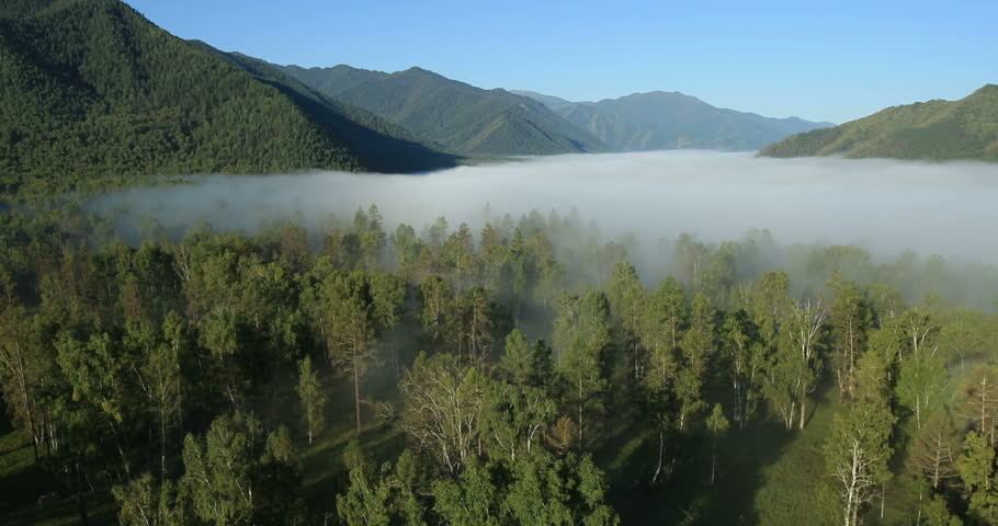 Aerial View: Morning Fog. Flying over the River. Forest Valley. Altai. Siberia. Aerial camera shot. Sunrise. Landscape panorama. Flight over the Mountains.