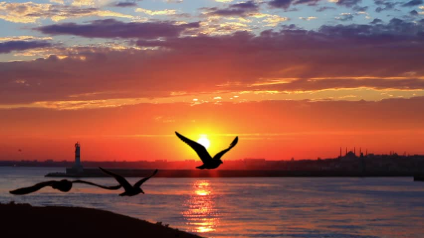 Flock of seabirds on beautiful sunset. Ship following seagulls flying against sunset. #4730735