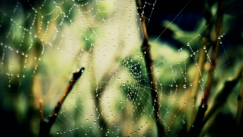 A Spiders Web. A Spiders Web Wet From The Morning Mist In A Close Up Shot, Filmed In RAW From The Blackmagic Cinema Camera