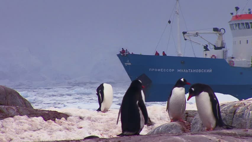ANTARCTICA-CIRCA 2012-An oceanic research vessel floats amongst icebergs in Antarctica as penguins look on.