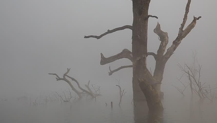 Jiulonghu Lake in Zixi, Dead tree on the lake under morning mist