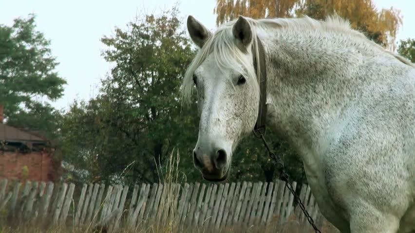 Head of White Horse #4957748