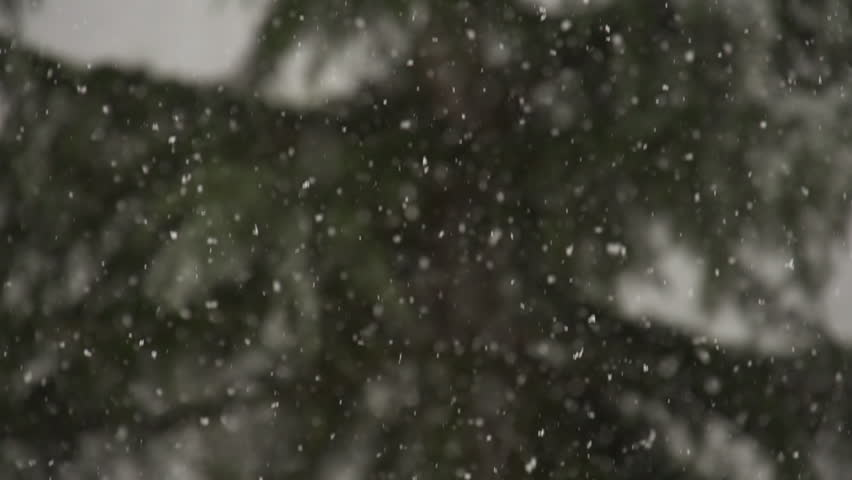 Close up view of snow falling in front of trees out of focus
