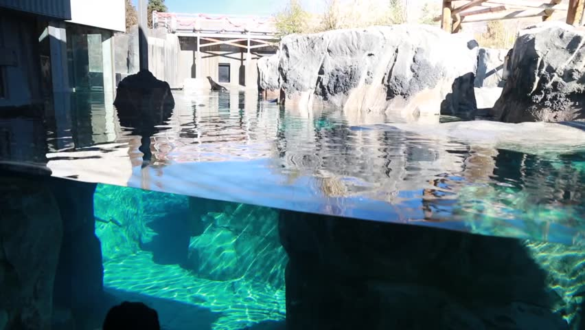 People at a zoo watching  seals swim in an aquarium