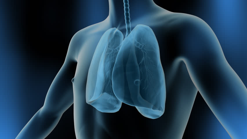 3D Lung