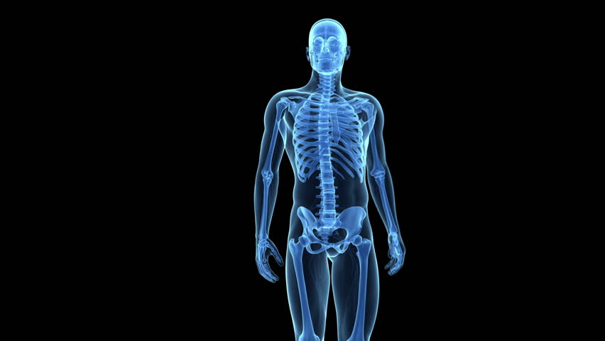 3d rendering animation, radiography of a human skeleton running, Skeleton