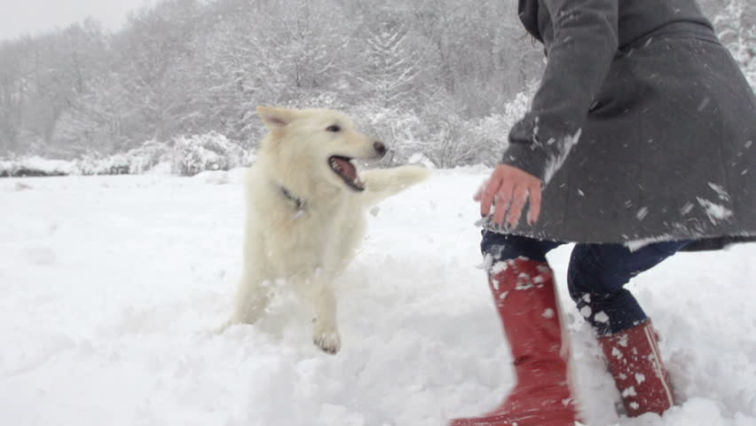 Slow Motion Of White Swiss Shepherd Dog And Young Woman Playing In Snow Covered Park
