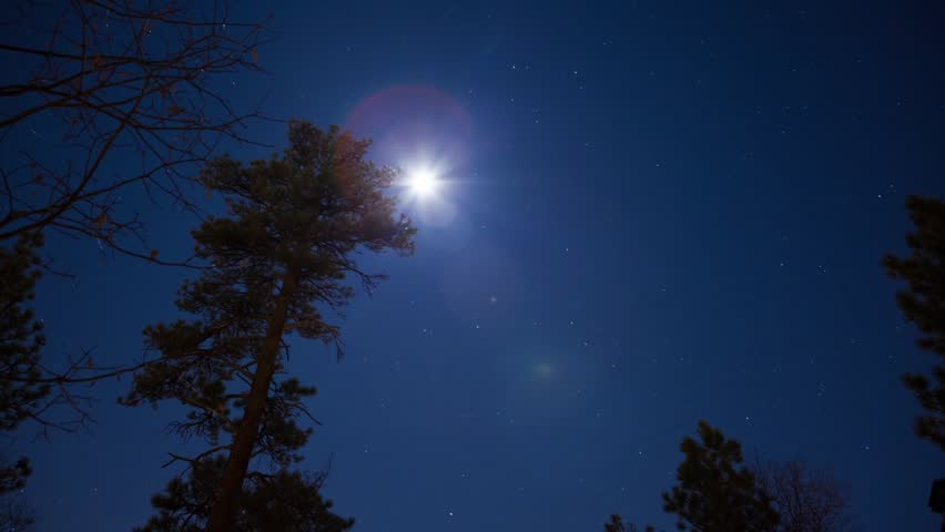 Moon and Stars Timelapse - A timelapse of the moon and stars through trees in the forest. | Shutterstock HD Video #5119838