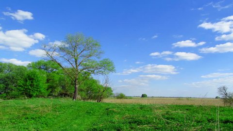 4K   Forest landscape with the sky. Without birds