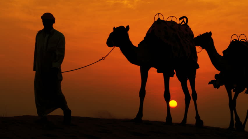 Middle eastern male leading his camels through desert sunset silhouette shot on RED EPIC, 4K, UHD, Ultra HD resolution | Shutterstock HD Video #5314406