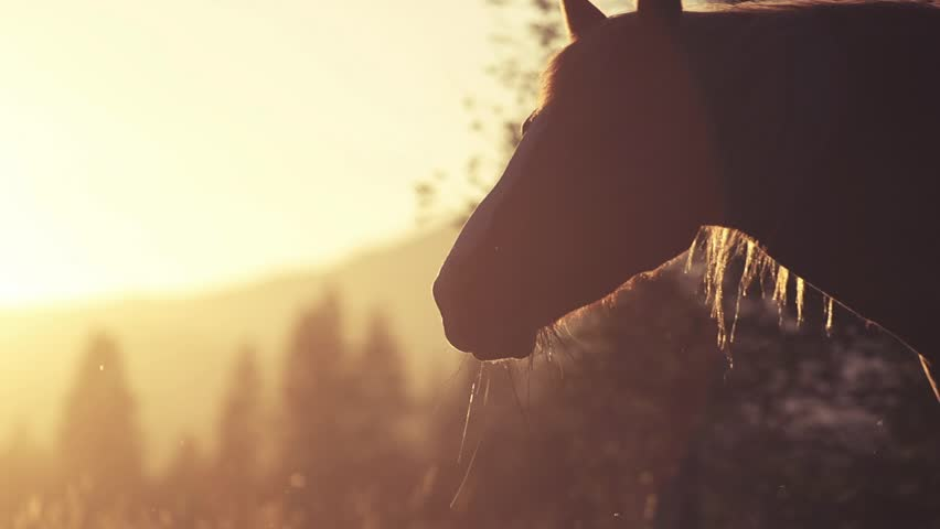 Horse Close-Up at sunset, 240fps | Shutterstock Video #5323316