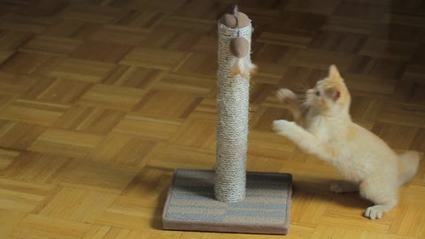 Kitten playing on the scratching post. Slow motion