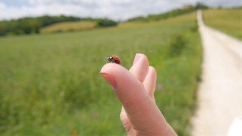 Ladybug flies away off a finger