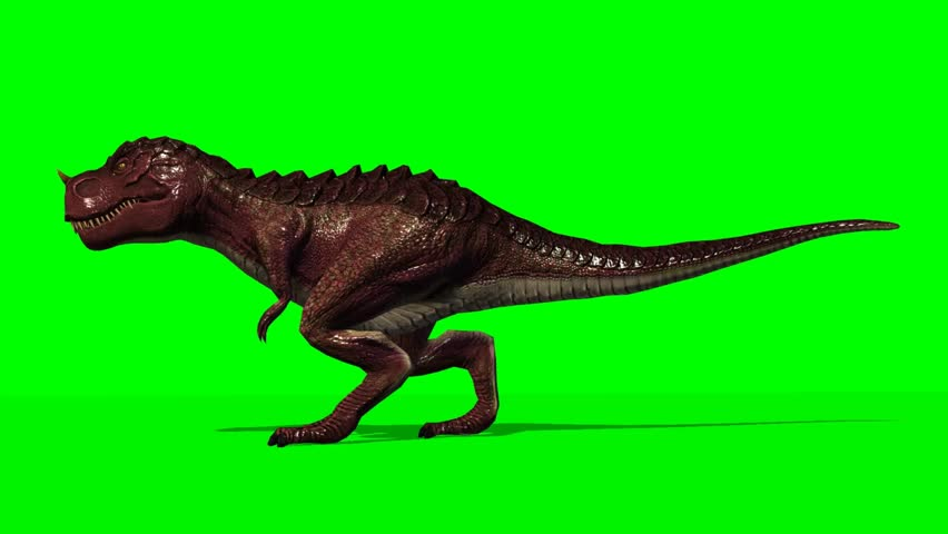 T Rex Dinosaurier  walk - seperated on green screen